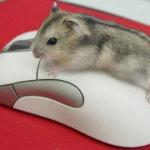 Что делать, если не работает мышка на ноутбуке?